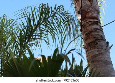 Palm Tree Sky