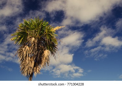 Palm tree and sky at the beach