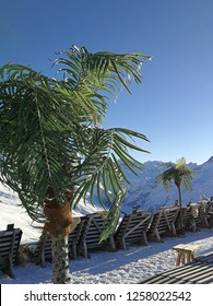 Palm tree, snow and relaxing on a snow-covered mountain peak. Davos, Switzerland