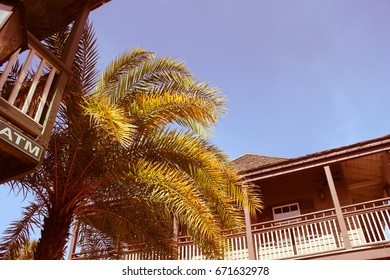 palm tree in st augustine