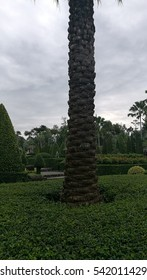 palm tree standing isolated in garden