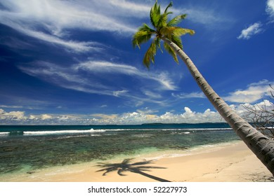 Palm tree ste against blue sky on beautiful island beach
