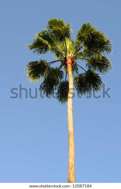 Palm tree with strong sun over a blue sky