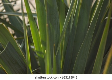 Palm tree in sun light