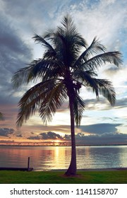 Palm Tree at Sunset, Fort Myers, FL
