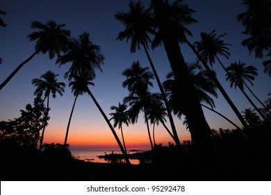 Palm tree sunset in Goa, India