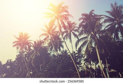 Palm tree sunset. Instagram effect (vintage)