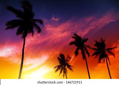 Palm tree sunset on tropical beach