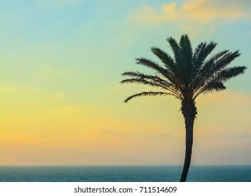 Palm tree sunset over the Mediterranean Sea at Ashkelon, Israel