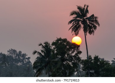 Palm tree sunset, South Goa in India