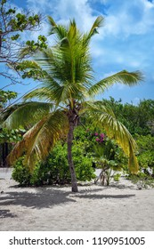 A palm tree surrounded by tropical flowers on Princess Cay island in the Bahamas.