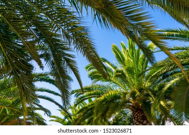 Palm tree tops silhouettes on bright blue sky background. Tropical vacation destination inspiration.