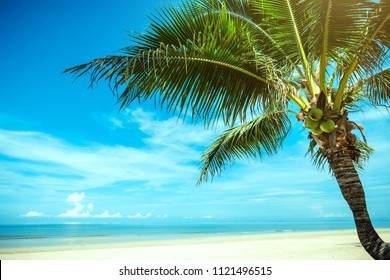 Palm tree and tropical beach