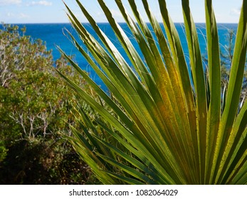 Palm tree at tropical beach with clear blue sea great summer vacation image