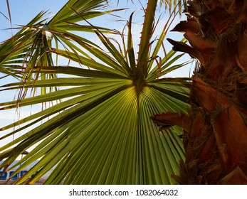 Palm tree at tropical beach coast with clear blue sky great summer vacation image