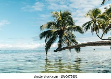 palm tree tropical landscape tahiti