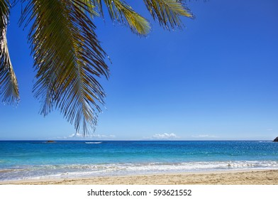 A palm tree in tropical paradise of Caribbean island at the beautiful empty Rendezvous beach in Antigua and Barbuda, with blue skies, turquoise waters and perfect sand