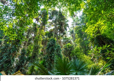palm tree in tropical rainforest