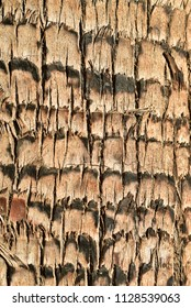 palm tree trunk bark close detail texture background
