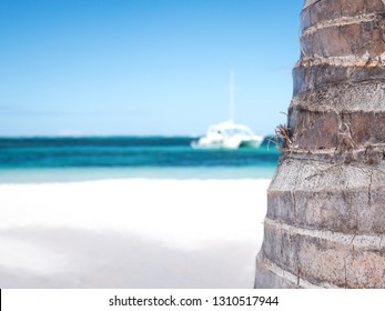 Palm tree trunk with caribbean beach background, closeup on bark. Nobody