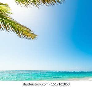 Palm tree and turquoise water in beautiful Raisins Clairs beach in Guadeloupe, French west indies. Lesser Antilles, Caribbean sea
