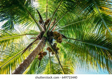 Palm tree from under