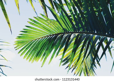 Palm tree under blue sky. Vintage background. Travel card. Retro effect.