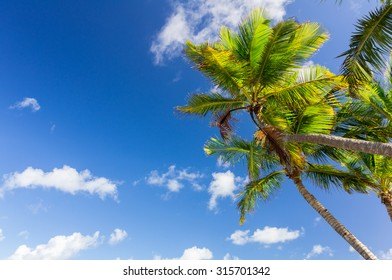 Palm tree under bright blue sky with clouds