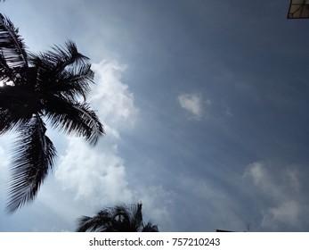 Palm tree,  under hot sun