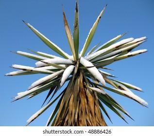 palm tree under snow