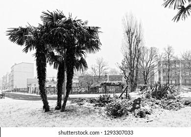 Palm tree under snow in Ivry sur Seine suburb of Paris