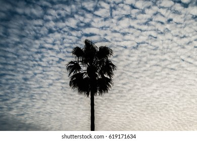 Palm tree under sunset cloudy sky