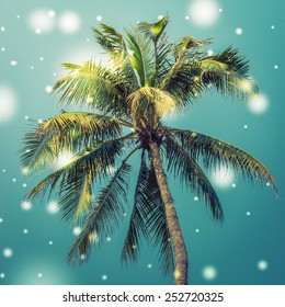Palm tree - vintage effect style pictures and light leak effect filter and snow effect