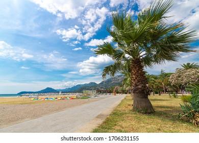 Palm tree walkway at Marina of Bar, Montenegro.