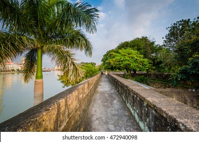 Palm tree and walls along the Pasig River, at Fort Santiago, Intramuros, Manila, The Philippines.