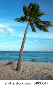 Palm tree in the wind on tropical beach!