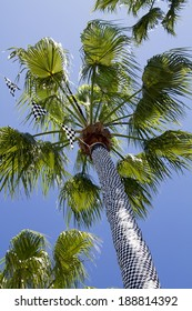 Palm tree wrapped in a checkered flag