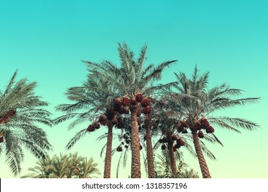 A palm trees against the backdrop of a blue sky