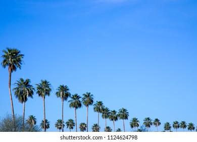 Palm trees against blue sky in Scottsdale, Arizona