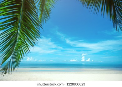 Palm trees against blue sky at tropical coast, coconut tree,summer tree