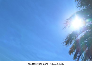 palm trees against the blue sky.upward view of palm trees against blue sky.Palm trees against blue sky, Palm trees at tropical coast,coconut tree,summer tree