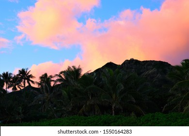 Palm trees against the blue sky during sunrise, sunset and during the day at beach parks on Oahu, Hawaii.  Also shadow of palm tree on green grass.