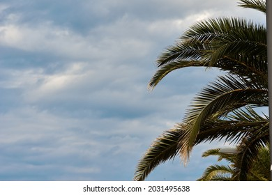 Palm trees against blue sky, Palm trees at tropical coast, coconut tree, summer tree. background with copy space. High quality photo
