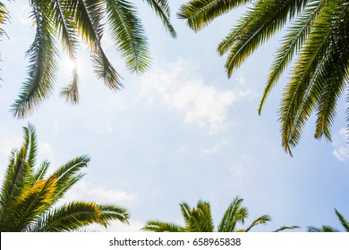 Palm trees against blue sky, Palm trees at tropical coast,coconut tree,summer tree