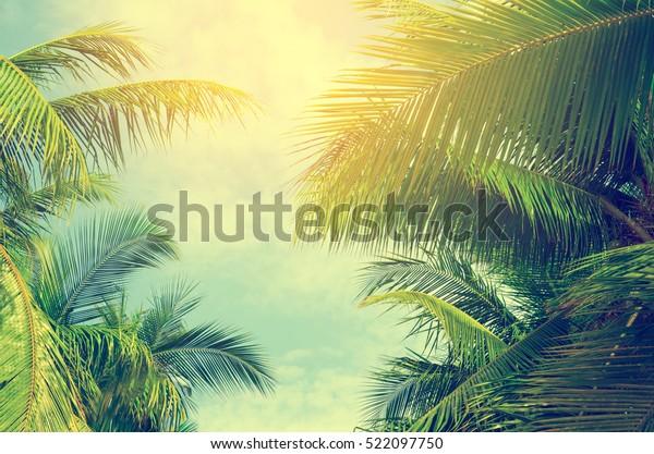 Пальмы против голубого неба, Пальмы на тропическом побережье, старинные тонированные и стилизованные, кокосовое дерево, летнее дерево, ретро