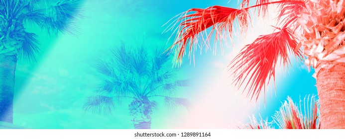 Palm trees against bright blue sky tropical coast stylized with sun flare and trendy coral color web banner format