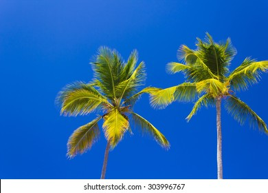 Palm trees against a brilliant clear blue sky