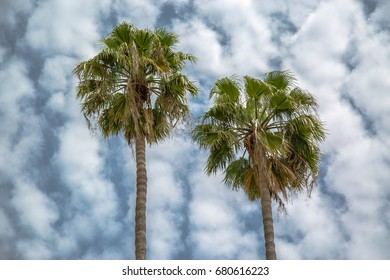 Palm trees against a cloudy sky