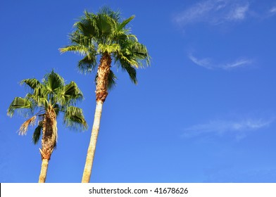 palm trees against a pretty blue sky room for your text