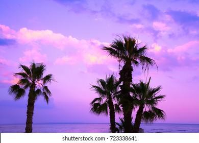 Palm trees against purple sunset sky. Tropical evening landscape. Beautiful wild nature.
